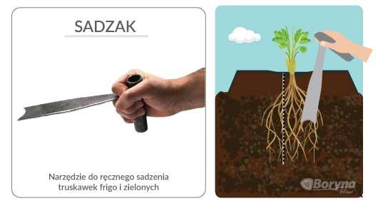 narzedzie do sadzenia truskawek