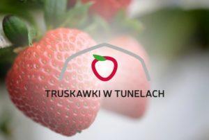 uprawianie truskawek w tunelach