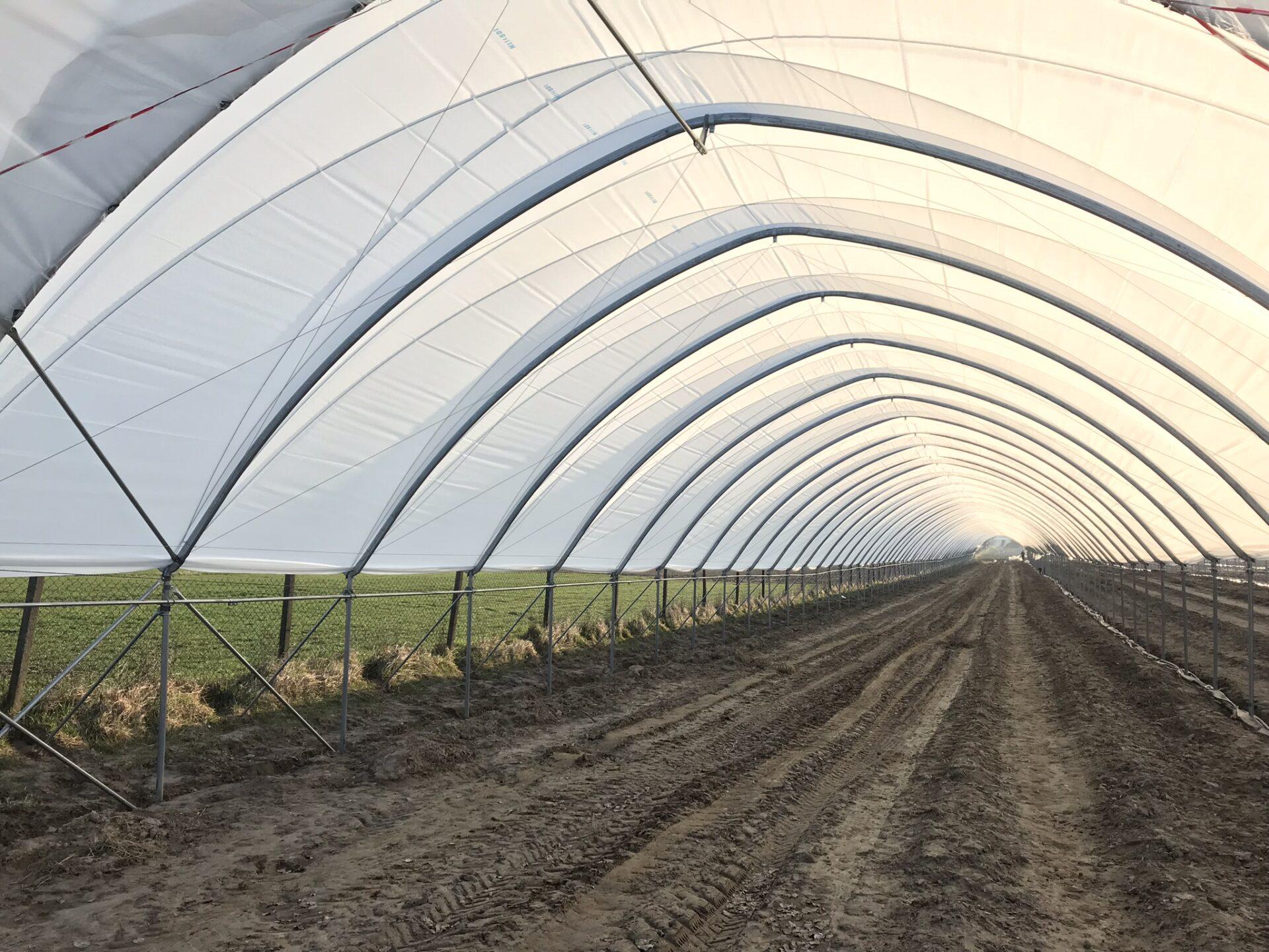 Uprawy w tunelach Boryna Stacja Rozwojowa
